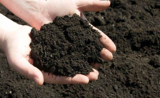 different types of soils found in India - Black soil